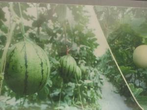 水果lehu68